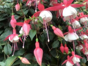 フラワードーム 花